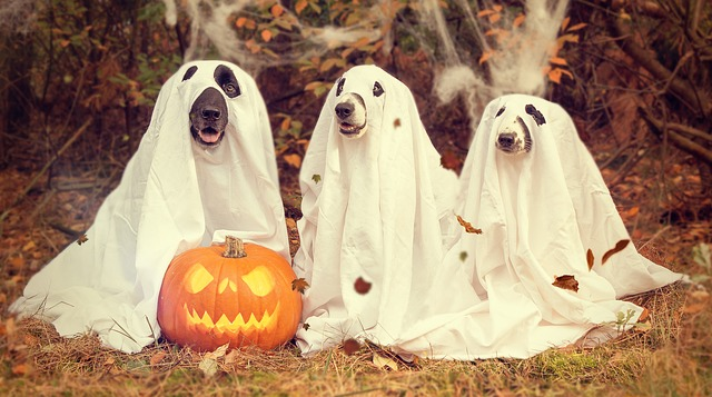 Read more about the article Yoga Poses for Halloween