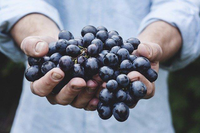 organic food yoga retreat