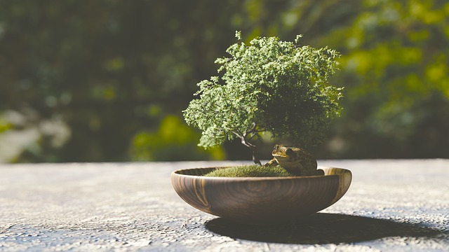 bonsai for meditation