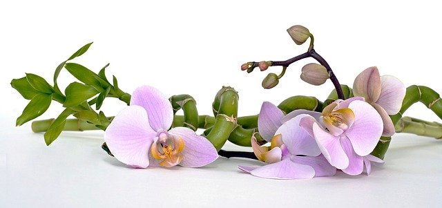 orchid for meditation