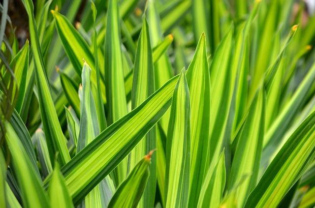 plants for meditation