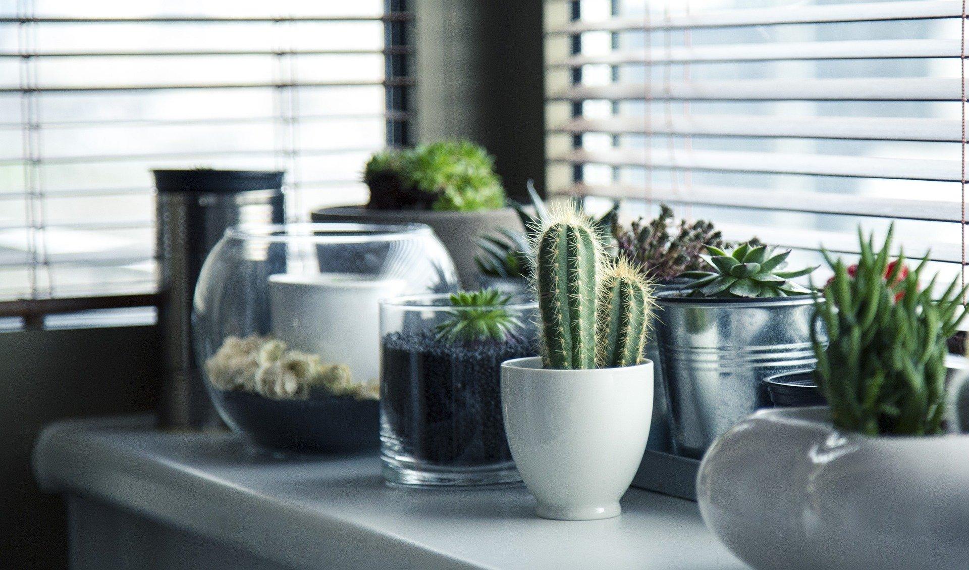 cacti for meditation