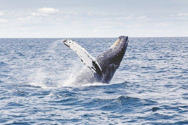 whalewatching and yoga