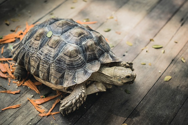 Read more about the article Practical Guide to Get Into Turtle Pose