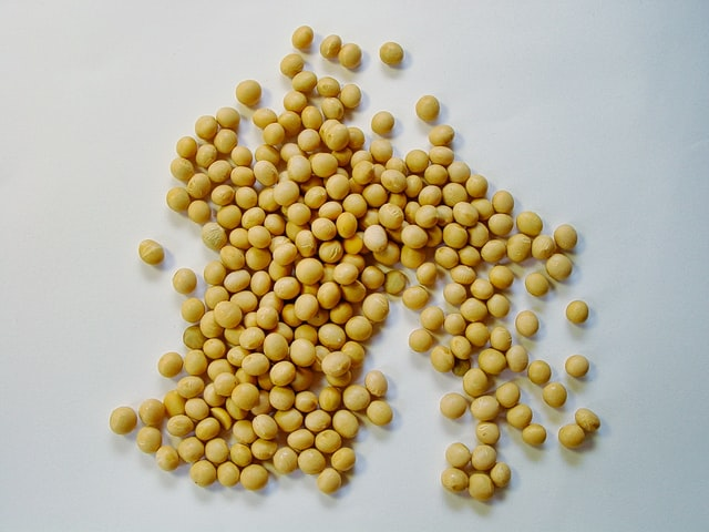 soy beans to make soy milk